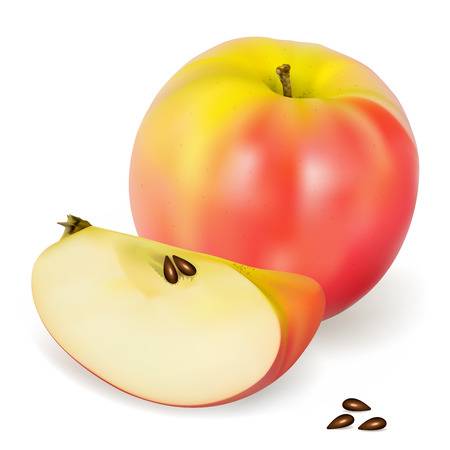 A realistic Pink Lady apple, vector illustration 일러스트