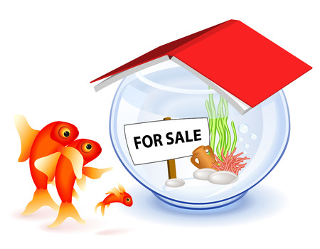 property for sale: Goldfish family in front of the new house