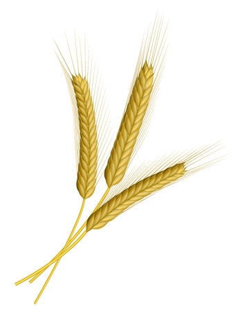 Three ears of wheat isolated on white Vector