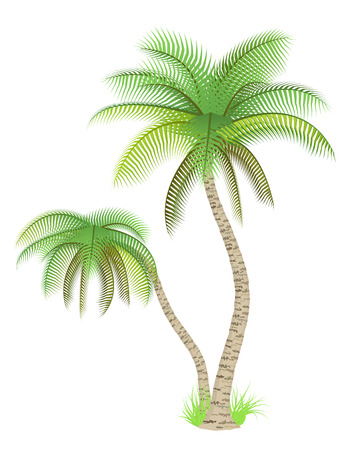 Vector illustration of palm trees over white Illustration