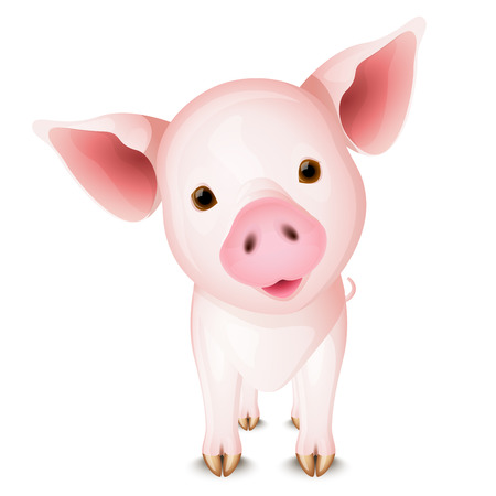 Little pink pig Vector