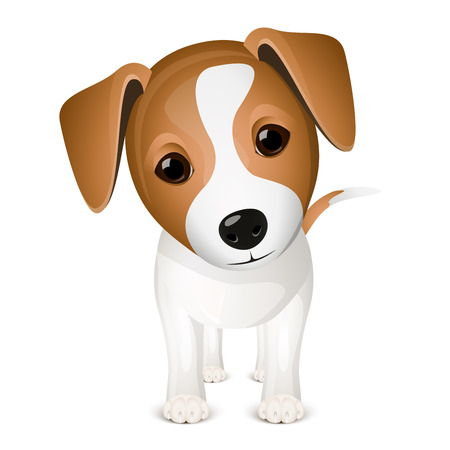 terriers: Little jack russel