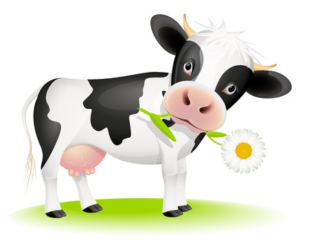 cow head: Little black and white cow eating daisy Illustration