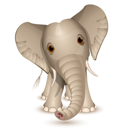 Little elephant isolated on white Vector