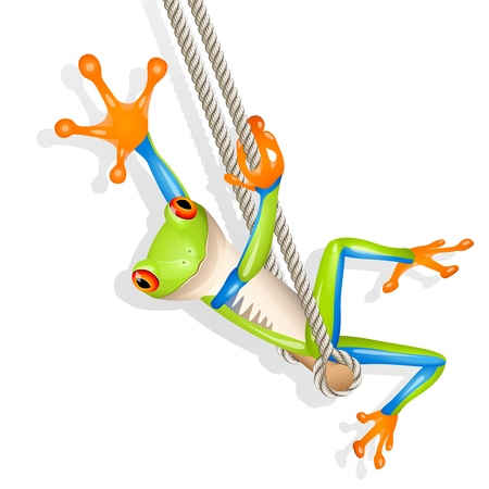 Little tree frog on a swing