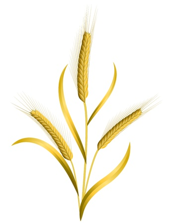 Three ears of wheat isolated on white Ilustração
