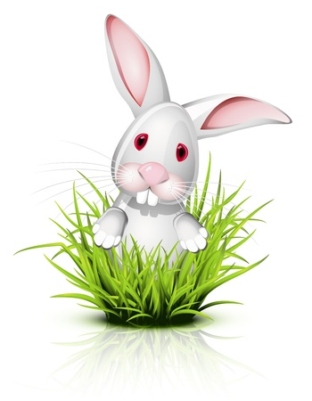 lapin blanc: Petit lapin blanc sur l'herbe de r�flexion