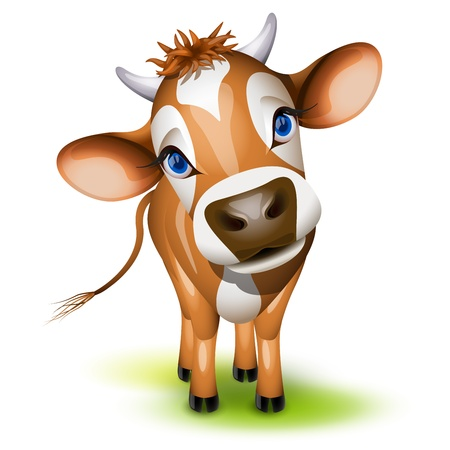 cow head: Little jersey cow with a cocked head and blue eyes Illustration