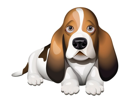 whelps: Basset Hound puppy lying on floor Illustration