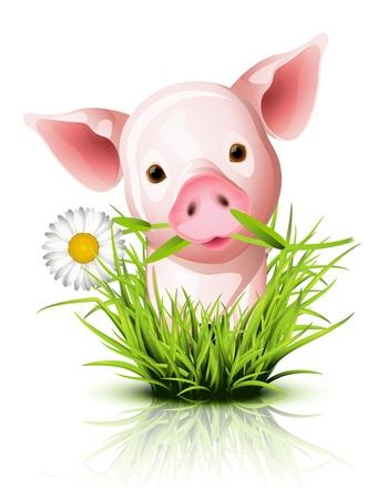 Little pink pig in green grass