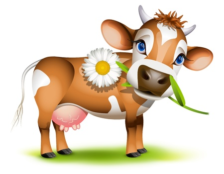 calf: Little Jersey cow eating daisy