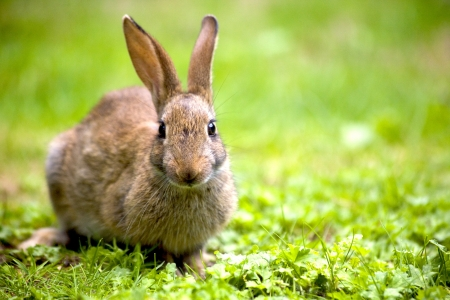 Wild rabbit in the nature Stock Photo - 17707788