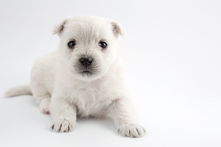 Adorable puppy over white background Stock Photo - 17707786