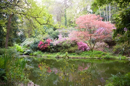 garden of eden: Blooming trees in the nature during spring