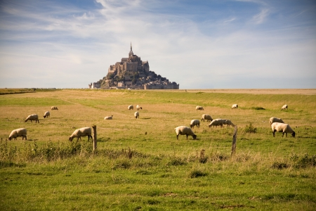 sheeps: Le Mont-Saint-Michel and sheeps in the pasture Stock Photo