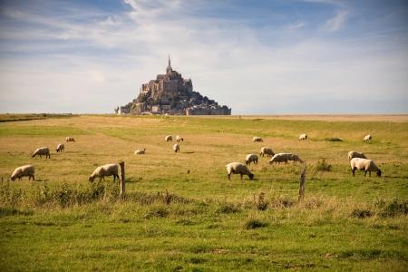 Le Mont-Saint-Michel and sheeps in the pasture Standard-Bild