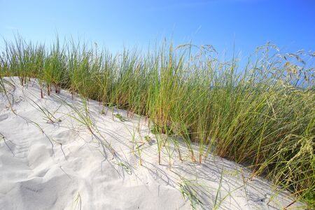 sawgrass: White sand dunes with grass and blue sky
