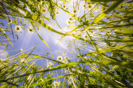 Close up of grass from the ground. Grass view from below Reklamní fotografie
