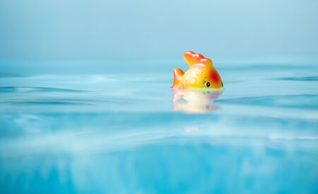 Cute toy Fish taking bath in swimming pool, shallow depth of field