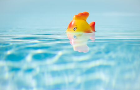 Red toy Fish taking bath in swimming pool, shallow depth of field and copy space