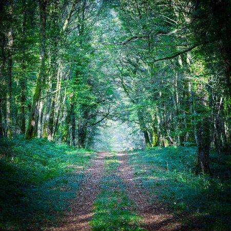 Path leading into the forest in Berry, France