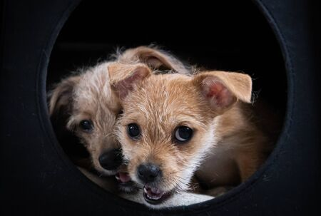 Two puppies playing in a dark black box Stock fotó