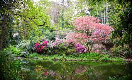Arbres japonais en fleurs dans la nature au printemps Banque d'images