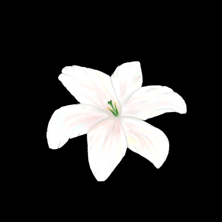 Illustration of white lily flower with isolated on black background in the style of oil painting