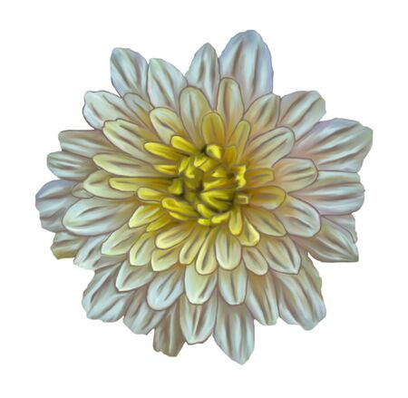Illustration of beige with yellow center aster flower in the style of oil painting isolated on white background Stock Photo