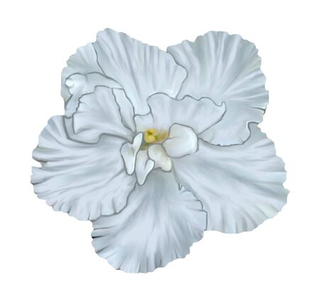 Illustration of white Saintpaulia flower with yellow stamens isolated on white background in the style of oil painting