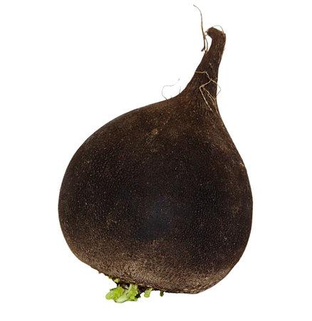 One brown ripe black radish isolated on white background