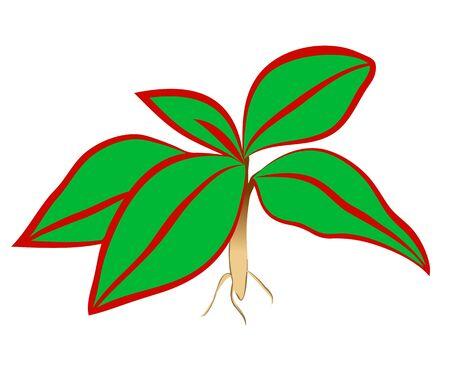 Vector illustration of a decorative houseplant