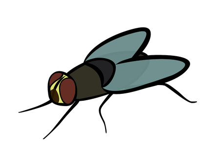 Flat cartoon gray ordinary fly isolated on white background vector illustration.