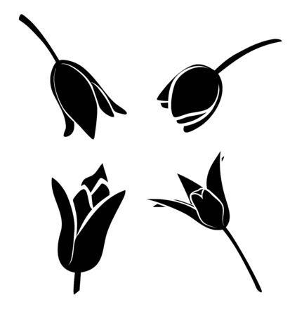 Vector illustration, set of four tulip flower silhouettes in black and white colors Ilustracja