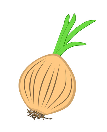 Vector illustration, flat cartoon unpeeled raw bulb of onion isolated on white background.