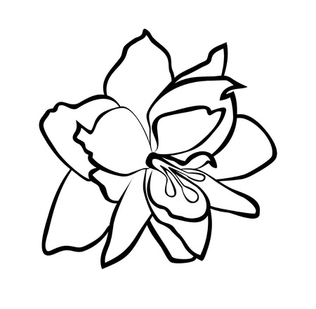Vector illustration, isolated Amaryllis flower in black and white colors Ilustrace