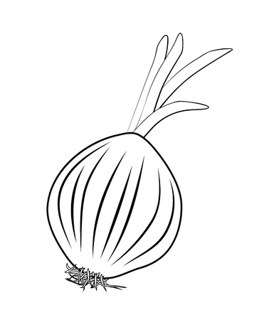Vector illustration, isolated onion shallot root in black and white colors, outline hand painted drawing Standard-Bild - 101509683