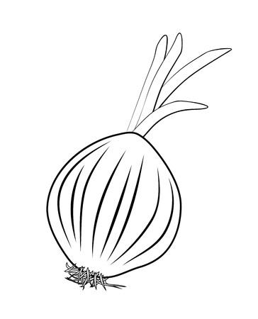 Vektorillustration, isolierte Zwiebelschalottenwurzel in den Schwarzweiss-Farben, handgemalte Zeichnung des Umrisses Vektorgrafik