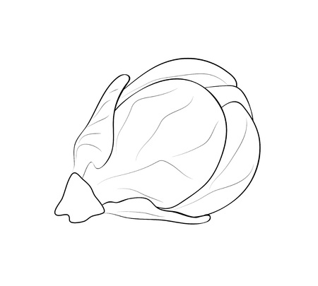 Vector illustration, isolated brussels sprouts in black and white colors, outline hand painted drawing