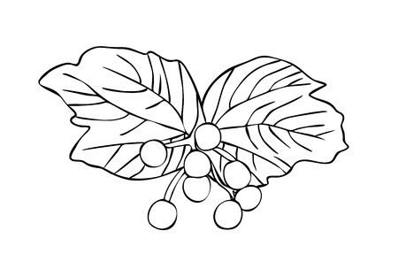 Vector illustration, isolated viburnum berries and leaves in black and white colors, outline hand painted drawing