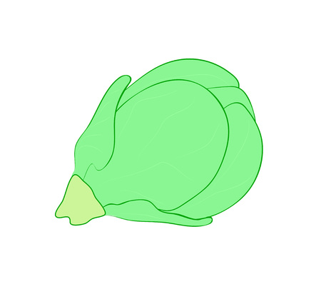 Vector illustration, isolated green brussels sprout, outline hand painted drawing