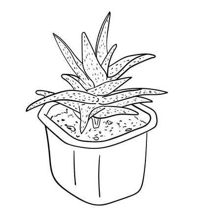 Vector illustration, isolated decorative aloe plant in a pot in black and white colors, outline hand painted drawing