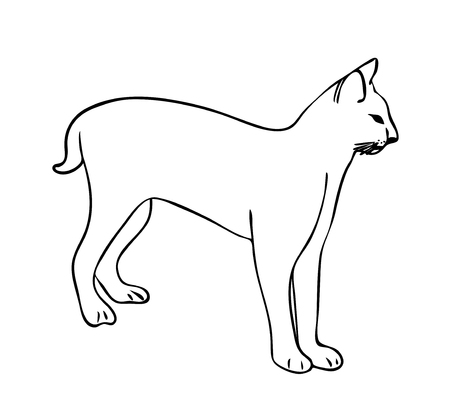 Vector illustration, isolated lynx in black and white colors, outline hand painted drawing