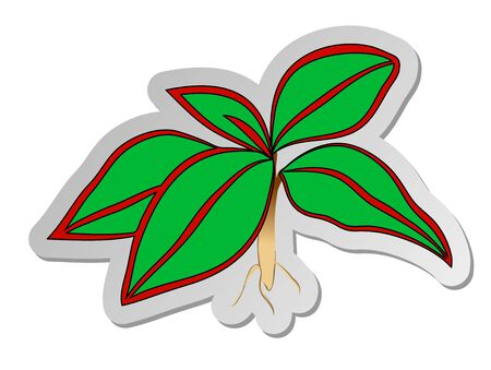 Vector illustration, sticker of green with red strips Aglaonema hoseplant in flat cartoon style isolated on white background Illustration