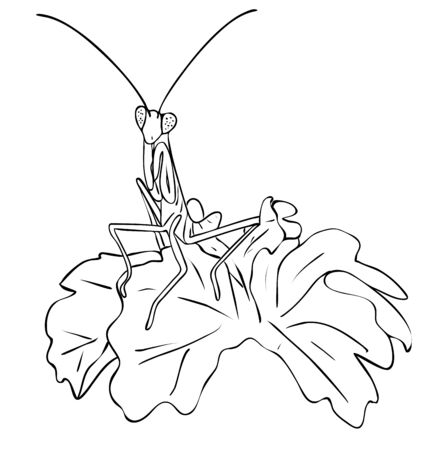 Vector illustration, isolated insect mantis in leaves in black and white colors, outline original hand painted drawing