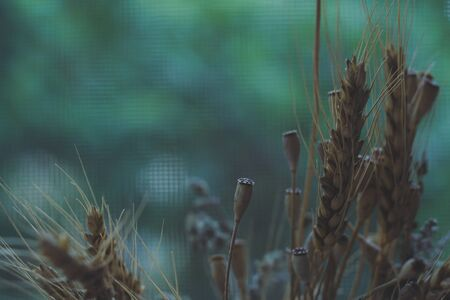 Nature blurred background with empty copy space and dry grass, flowers and wheat spikelets Foto de archivo