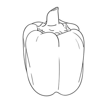 Vector illustration, isolated bell pepper in black and white colors, outline original hand painted drawing