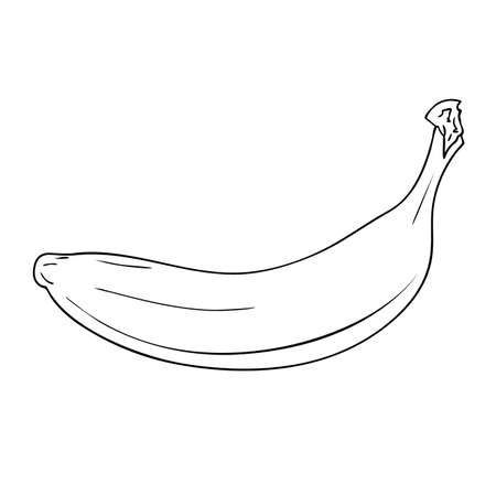 Vector illustration, isolated banana fruit in black and white colors, outline original hand painted drawing
