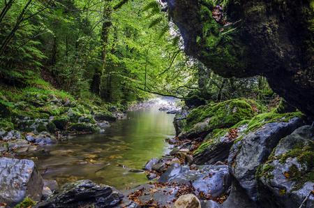 intriguing: Small spring inside the Navarras forest in Spain. Shadows of the forest are making this picture interesting and intriguing, also adding little dramatic look. The image is clean and detailed for precise work!