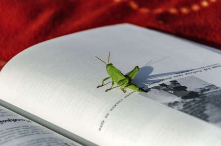 The grasshopper is an insect of the suborder Caelifera in the order Orthoptera photo